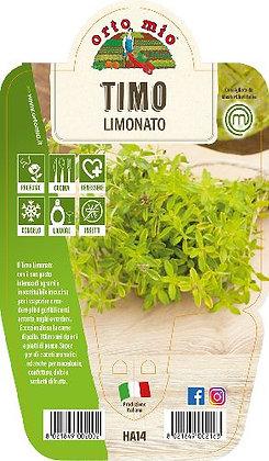 TIMO LIMONATO V.14