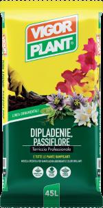 Dipladenie Passiflore