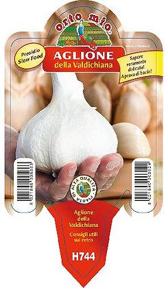AGLIONE DELLA VALDICHIANA vaso10
