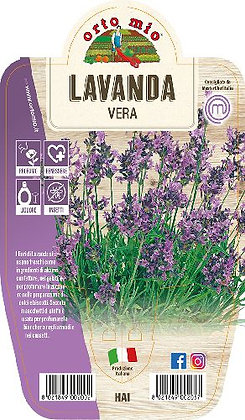 LAVANDA VERA V.14