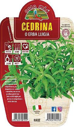 CEDRINA O ERBA LUIGIA V.14