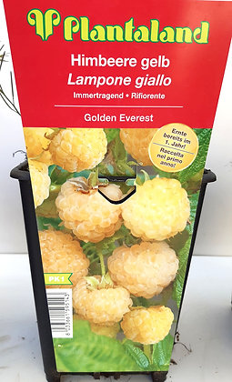 LAMPONE GIALLO V.16