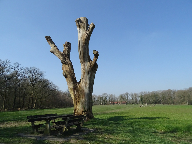 Het Hagmolenbos