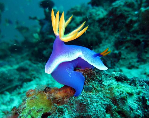 Island_divers_caluya_diving_snai_4l_IMG_