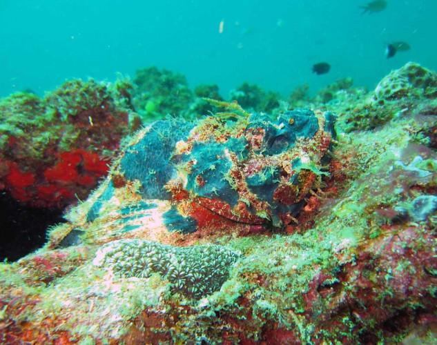 Island_divers_caluya_diving_dragon_IMG_1