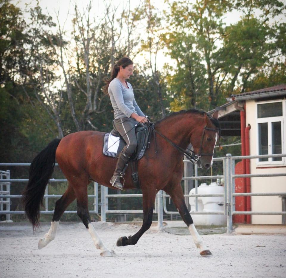 4a303ba4-b8#pre #purarazaespañola #prestallion #chevalibérique #chevalespagnol #spanischepferde #purraceespagnol #iberischepferde #beautifulhorses