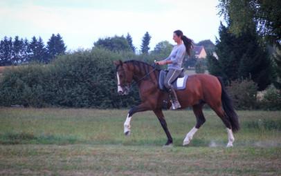 #pre #purarazaespañola #prestallion #chevalibérique #chevalespagnol #spanischepferde #purraceespagnol #iberischepferde #beautifulhorses