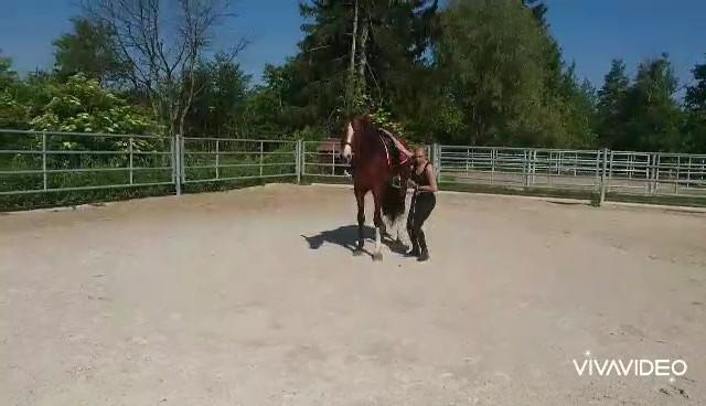 Novato - mai 2020.mp4 #pre #purarazaespañola #prestallion #chevalibérique #chevalespagnol #spanischepferde #purraceespagnol #iberischepferde #beautifulhorses