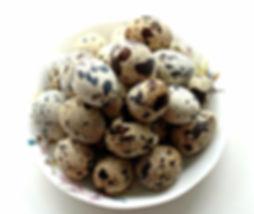 инкубационное яйцо маньчжурского перепела купить