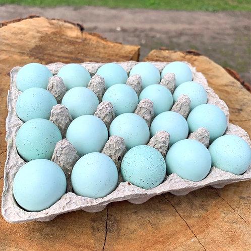 Инкубационное яйцо перепела селадон (целадон) 20 шт
