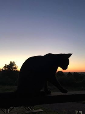 cat and sunset