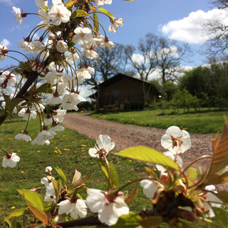 blossom on our fruit trees