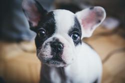 dog-pet-14644