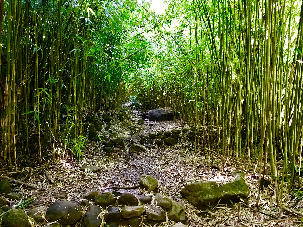 Bamboo thicket and trail