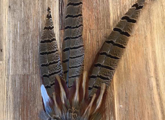 Pheasant feather pin - medium