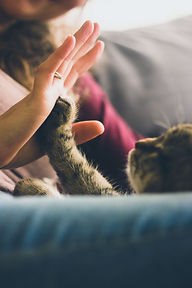 person-giving-high-five-to-grey-cat-3886