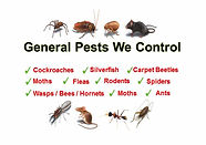 All pest control insects.jpg