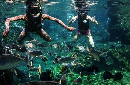 Snorkelling at Ushaka Marine World