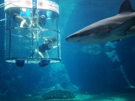 Shark dive Ushaka Marine World