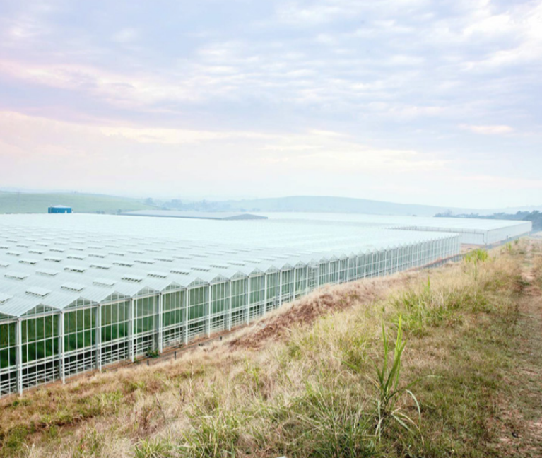 DubeAgriZone-Greenhouses