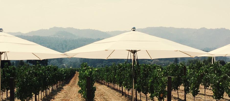 Napa Valley Harvest Season: Newbie Tips