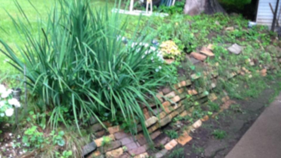 Plantings On Brick Wall 13.33x7.5.jpg
