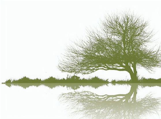 BackgroundTree_upscaled_image_x8.jpg