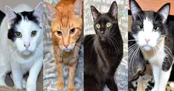 banner cats