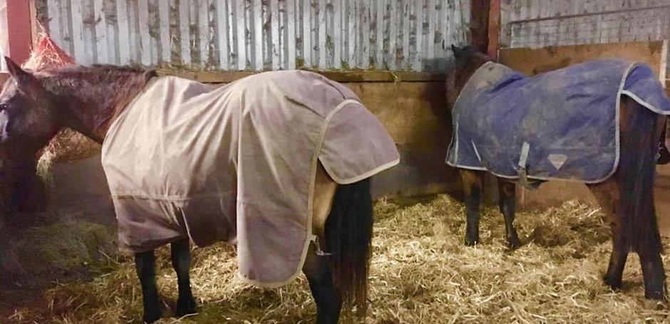 Poppy & Beau In A Warm Stable