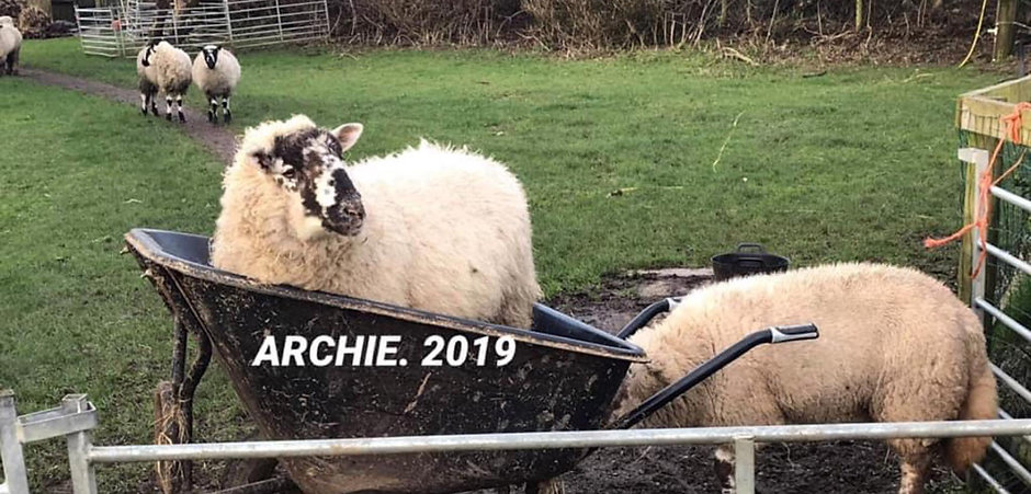 Archie In A Barrow! (2019)
