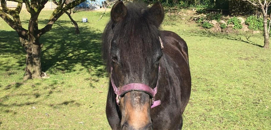 Favour Came To Us As Quite An Elderly Mare