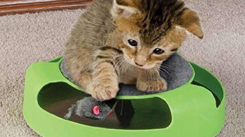 Pet Supplies Cat Plastic Catch the Mouse Interactive Turntable Pet