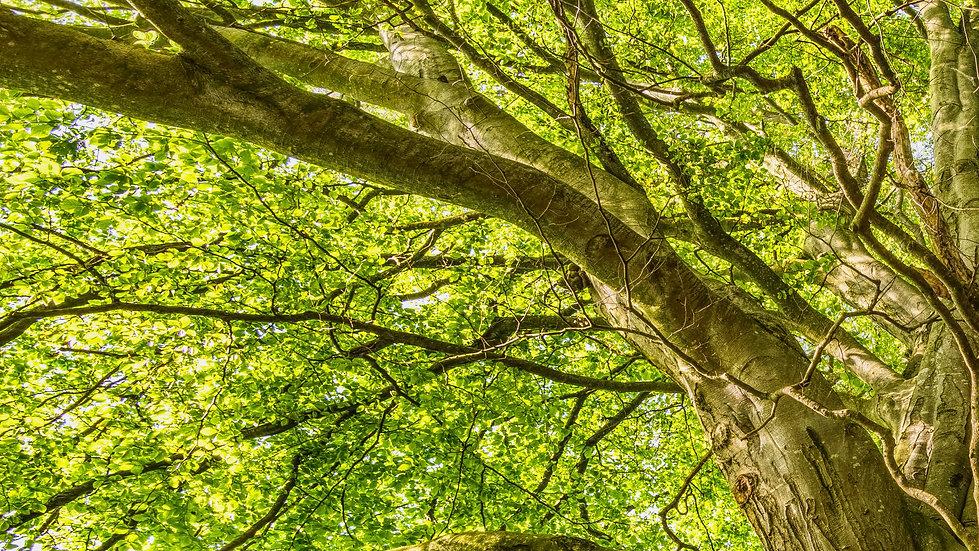 CNP_tree-01.jpg