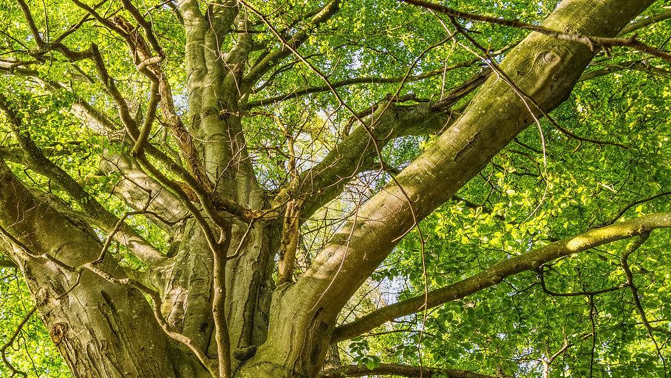 POD_tree-01.jpg