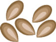 seeds-4b.png