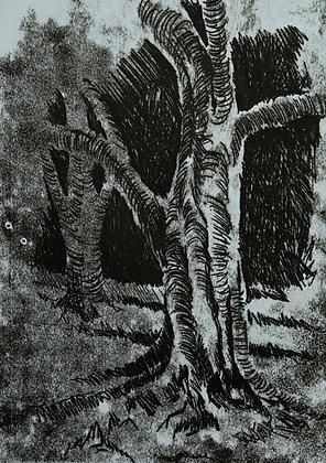 Árvores - Ricardo Coelho