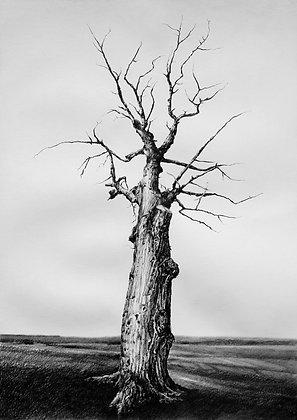 Atrás das árvores - Ricardo Coelho