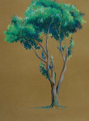 Árvore - Ricardo Coelho