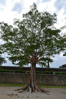 arbre CHRU La Colombière, Montpellier