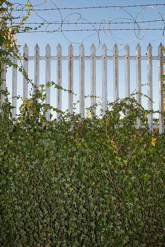 Evergreen Fence