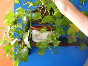 Repotting - מתי להגדיל עציץ (ואיך עושים את זה)