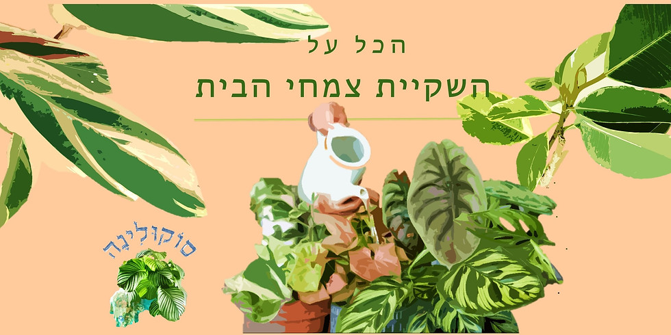 """זום אחה""""צ: הכל על השקיית צמחי בית"""