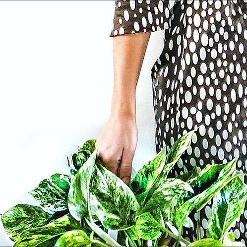 שובר מתנה לסדנת אונליין לגידול צמחים +גיפט קארד להזמנת צמחי בית!