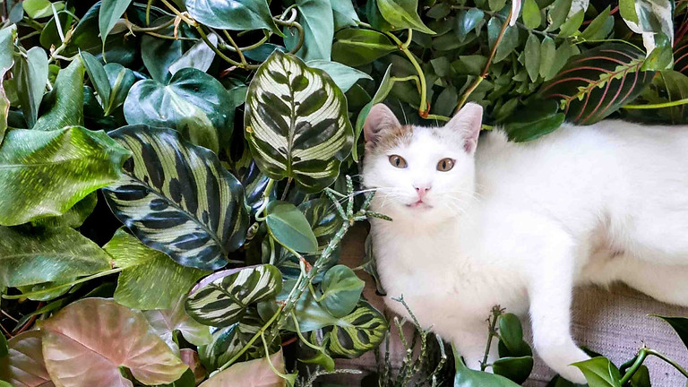 להחיות את הבית עם צמחים: מחזור אוקטובר 2021