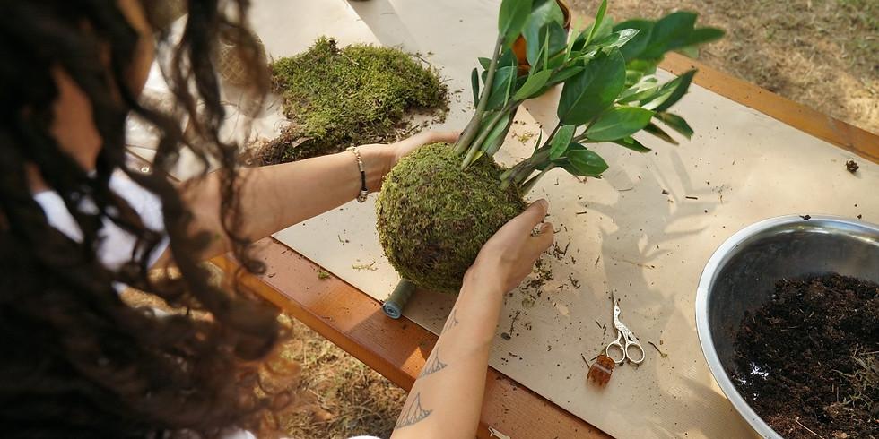 סדנת גידול צמחים בבית ויצירת קוקודמות