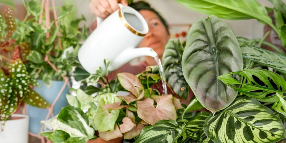 לגדל צמחי בית בהצלחה: מחזור ראש השנה