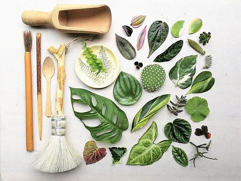 שובר מתנה לקורס האונליין לעיצוב הבית עם צמחים