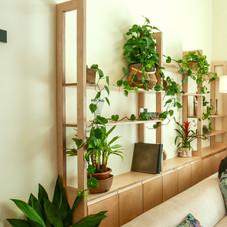 פרויקט צמחים ביום אחד במושב חמד