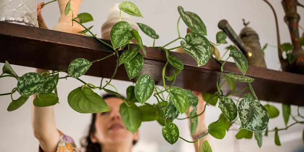 להחיות את הבית עם צמחים: מחזור יולי 2021