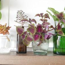 פרויקט צמחים של יום אחד בהרצליה
